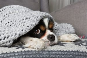 cute-dog-under-warm-blanket