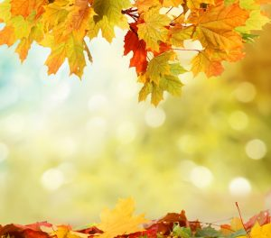autumn-background